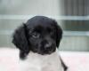 Pups-6-weken-23