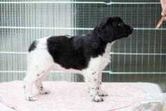 Pups-6-weken-20