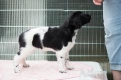 Pups-6-weken-25