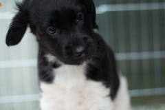 Pups-6-weken-26