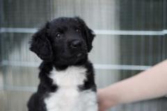 Pups-6-weken-3
