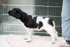 Pups-6-weken-30
