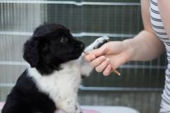Pups-6-weken-7