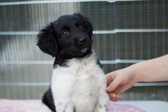 Pups-6-weken-9